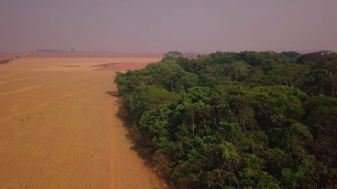 Campanha internacional pelo fim do desmatamento ilegal no Brasil tem apoio de Mateus Solano